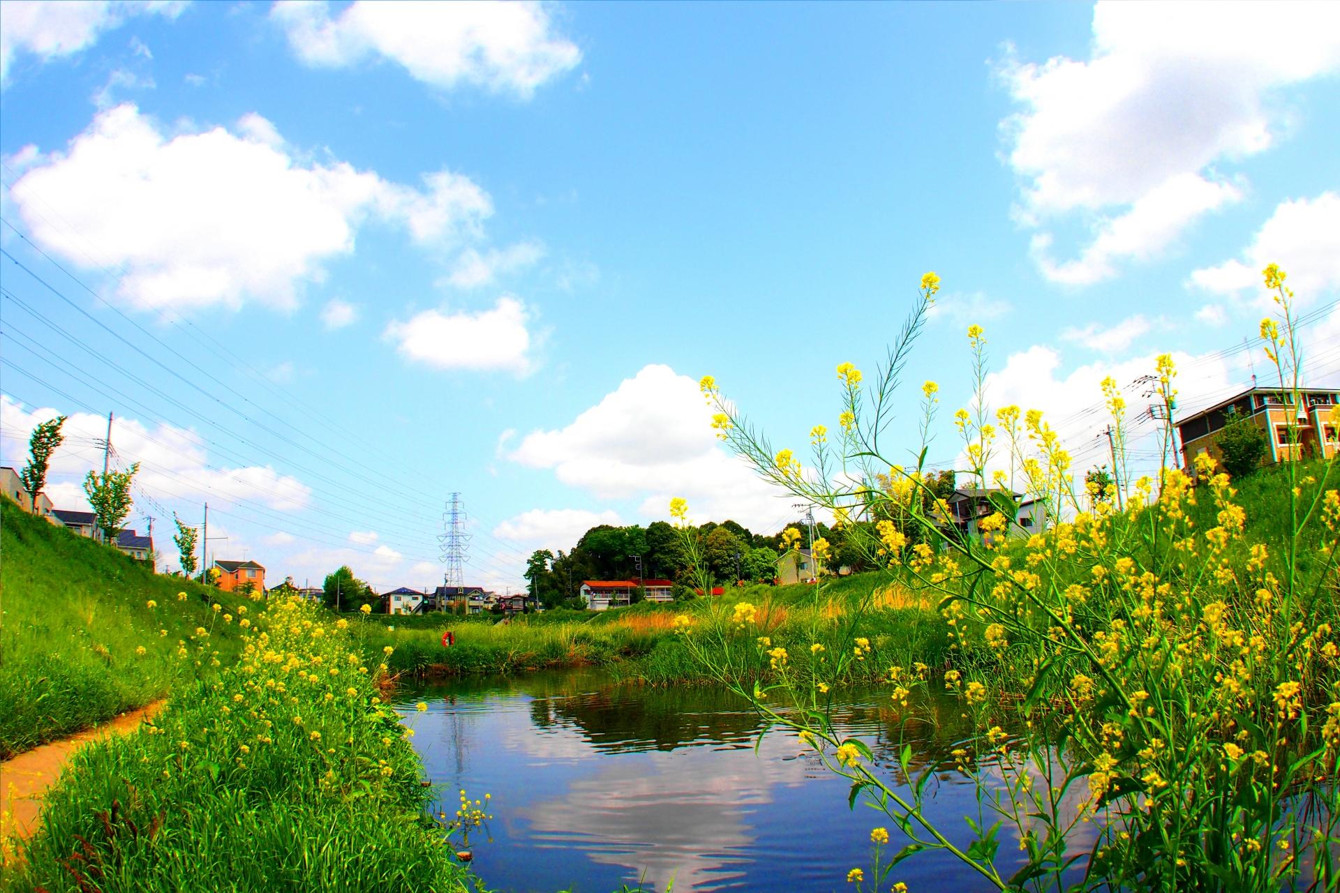 流山市の大堀川の自然豊かな風景